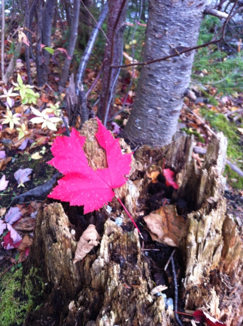 Brightest red leaf I've ever seen.