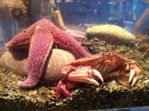 And the mini aquarium! So fun.
